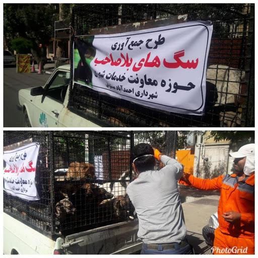 جمع آوری سگ های بلاصاحب از سطح شهر احمدآباد مستوفی